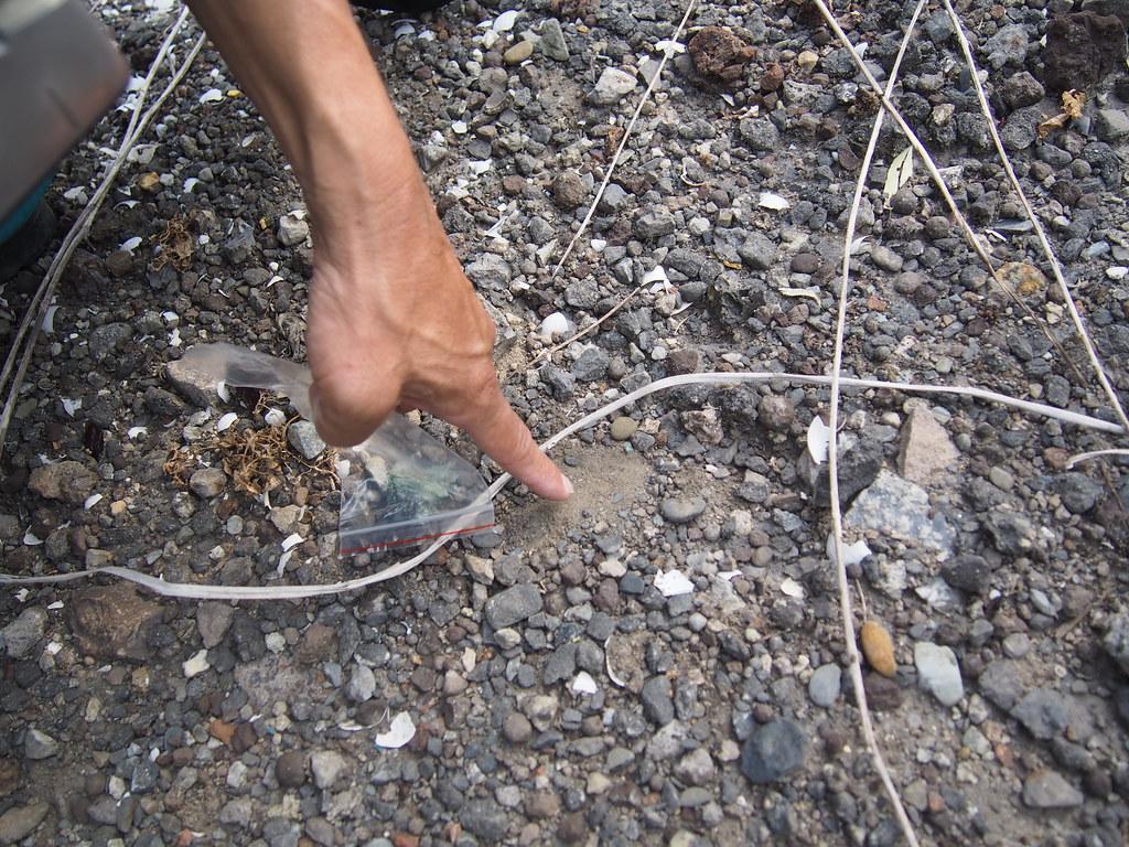 看似與土壤沒什麼兩樣的地方,重金屬檢測值竟大幅度超標。攝影:陳宣竹。
