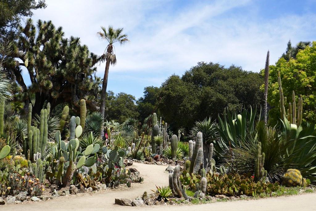 ... Cactus Garden, Stanford University   By Ali Eminov