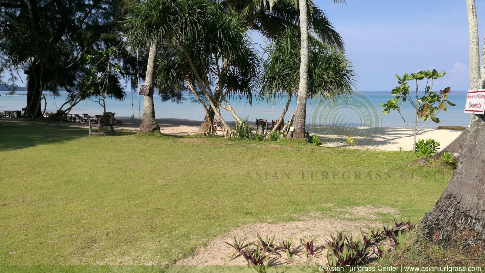 image of manilagrass lawn at Ko Kood, Thailand