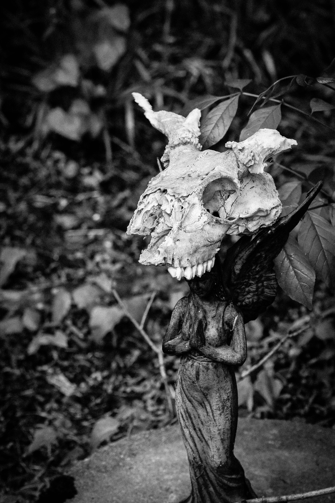 Macro Monday's New Band Name Is Skull Angel, Pass It On