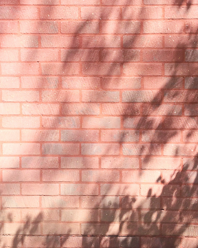 tree shadows on wall