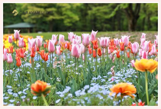 名城公園(名古屋市)にあるチューリップ花壇
