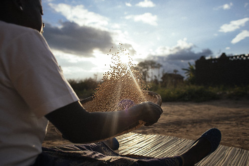 Trading for Malawi's farmers, and the future | by Enhanced Integrated Framework (EIF)