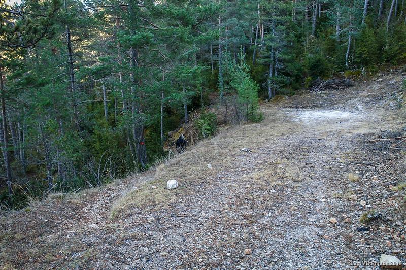 Desvío del camino principal en el Bosc de Palomera