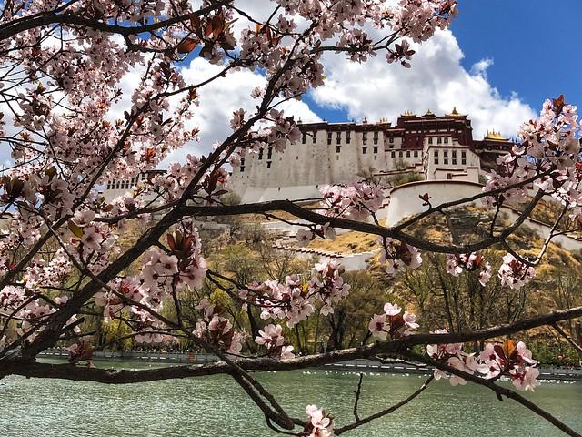 Palacio de Potala por detrás (Lhasa, Tíbet)