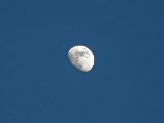 Zunehmender Mond vor blauem Abendhimmel