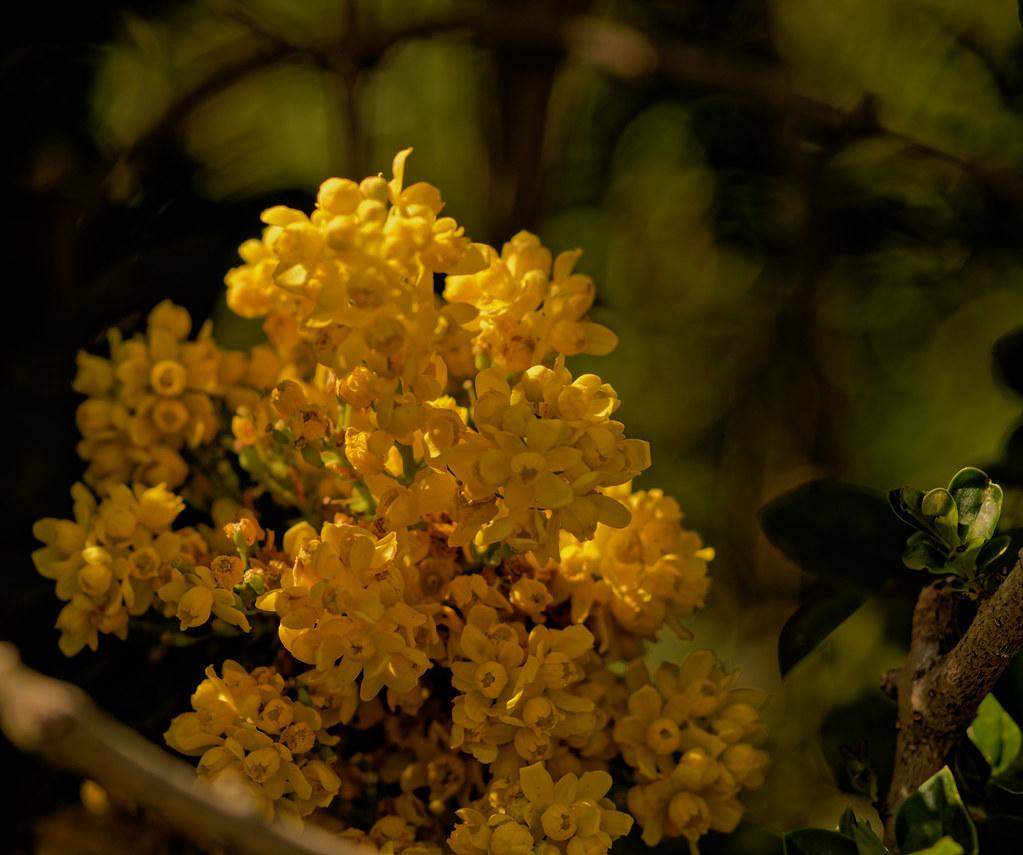 Si Le Mais Etait Une Fleur If Corn Was A Flower Pascal Franche