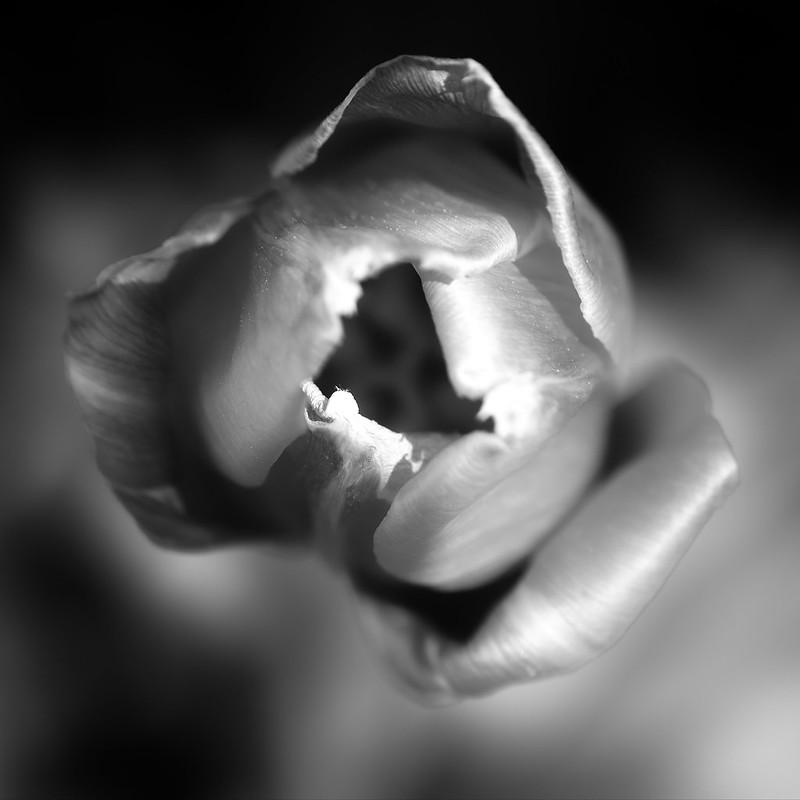 Ca fleurit! 27011451877_e693f1e05c_c