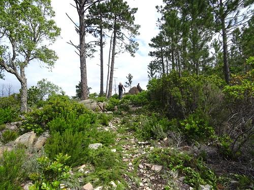 Sur le sentier de la crête de Punta Piana (PR6) : le petit col aux pins