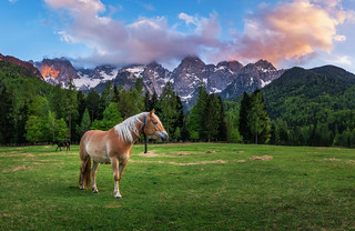 Horse and the mountain | by Dreamy Pixel
