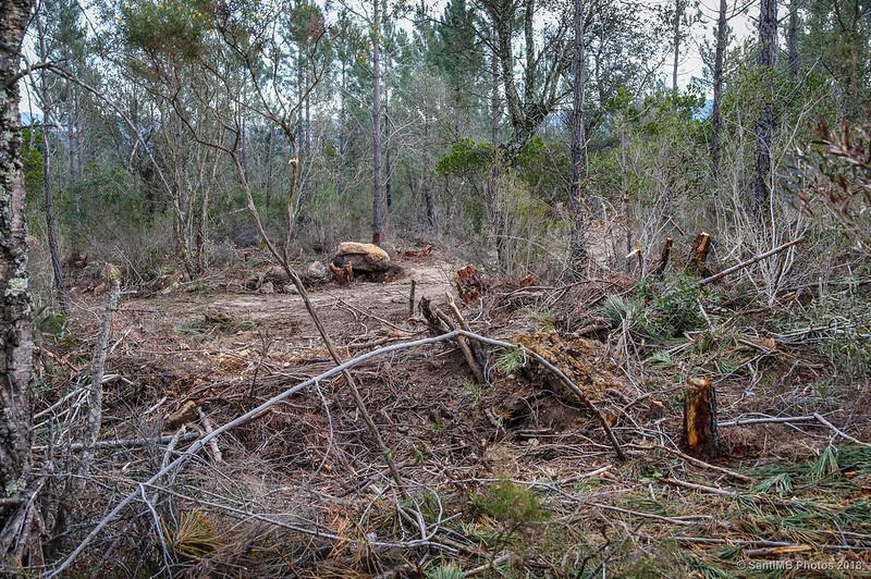 Trabajos forestales en el Bosc de les Agudes
