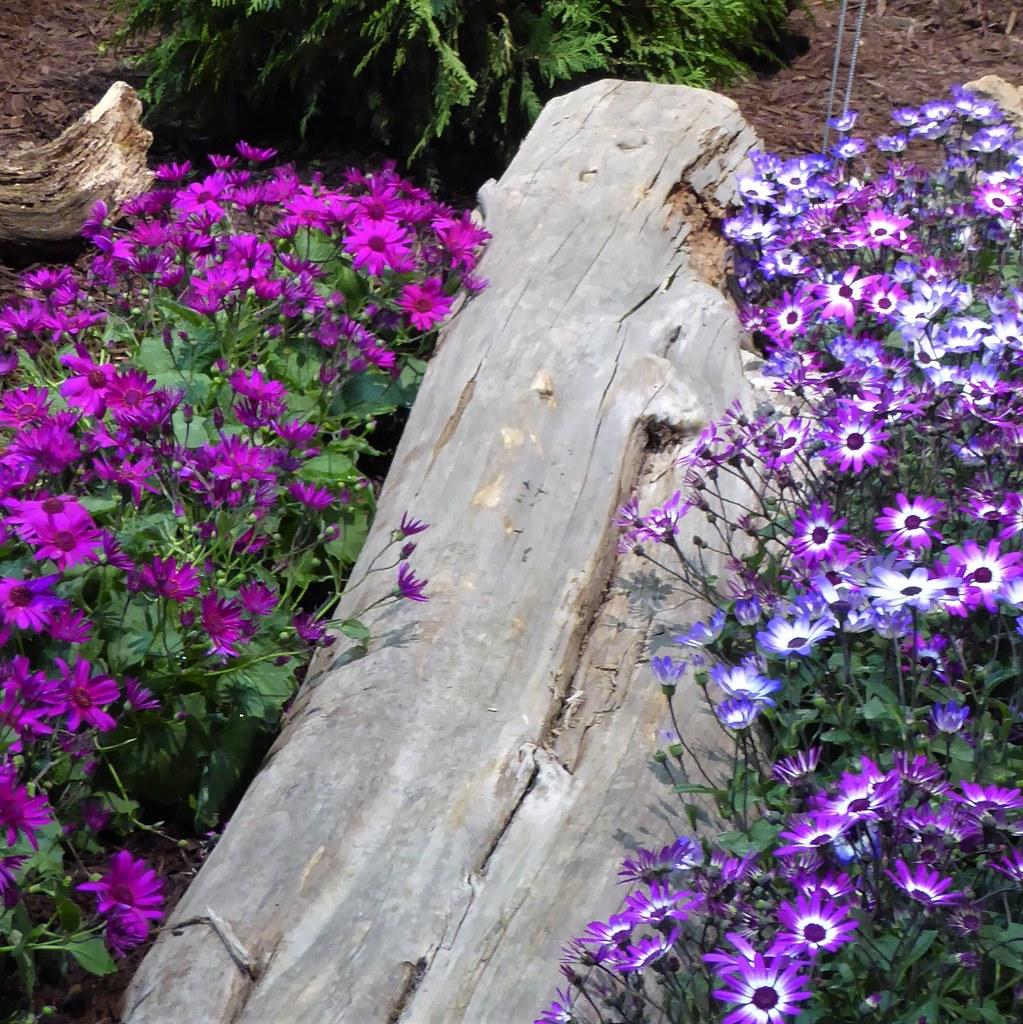 Chicago Navy Pier Chicago Flower Garden Show Pink And Flickr