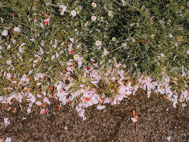 blossom by grass border