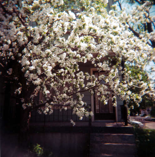 Crabapple tree | by J.T.R.