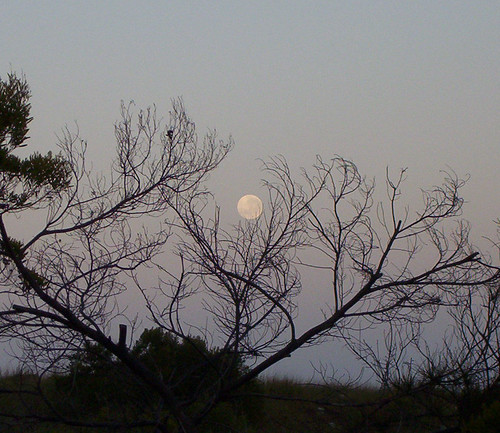 Moonset 10-8-06 | by Mundoo
