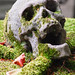 2006-08-26 Memento mori closeup