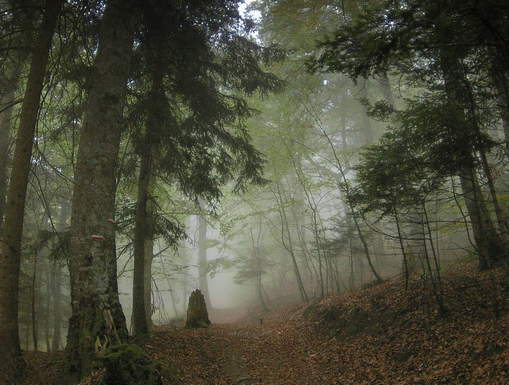 Fog In A Pyrenean Forest Im Totally Flattered That So Man Flickr