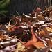 Leaves Finish