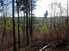 View From Jones Creek Ridge
