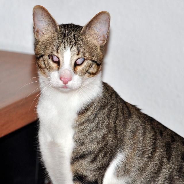 Mannheim-Seckenheim, Mai 2018 - Blinde Katze gefunden / zugelaufen