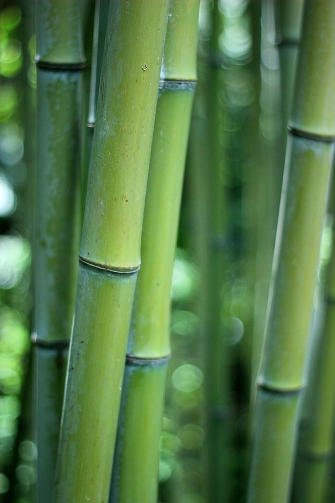 Bambu Jardin Botanico Marimurtra De Blanes Espana 2018 Flickr - Jardin-bambu