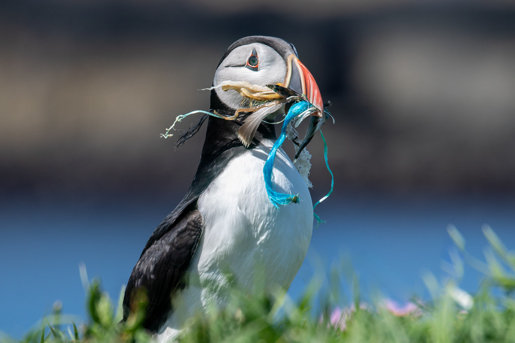 Image result for puffin plastic