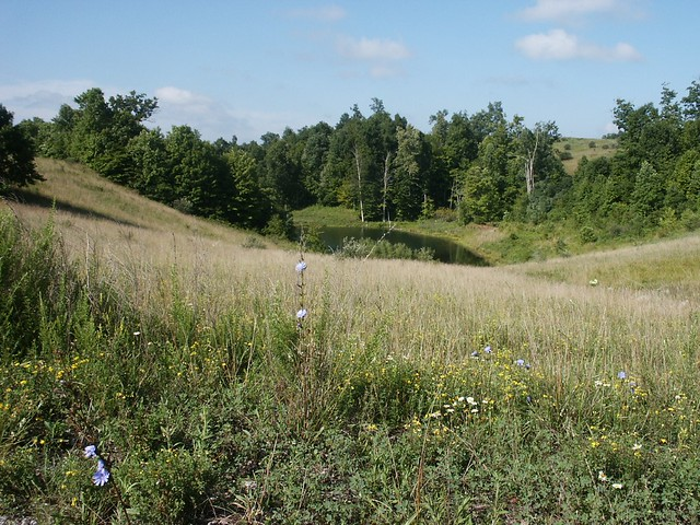 Coal mine reclamation on National Forest System lands on the Wayne National Forest in Ohio