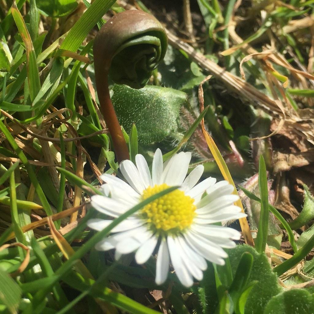 Fleur D Avril Parc Josaphat Schaerbeek Bfkn Flickr