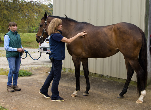 Dr. Debra Taylor shows how to examine a horse for obesity