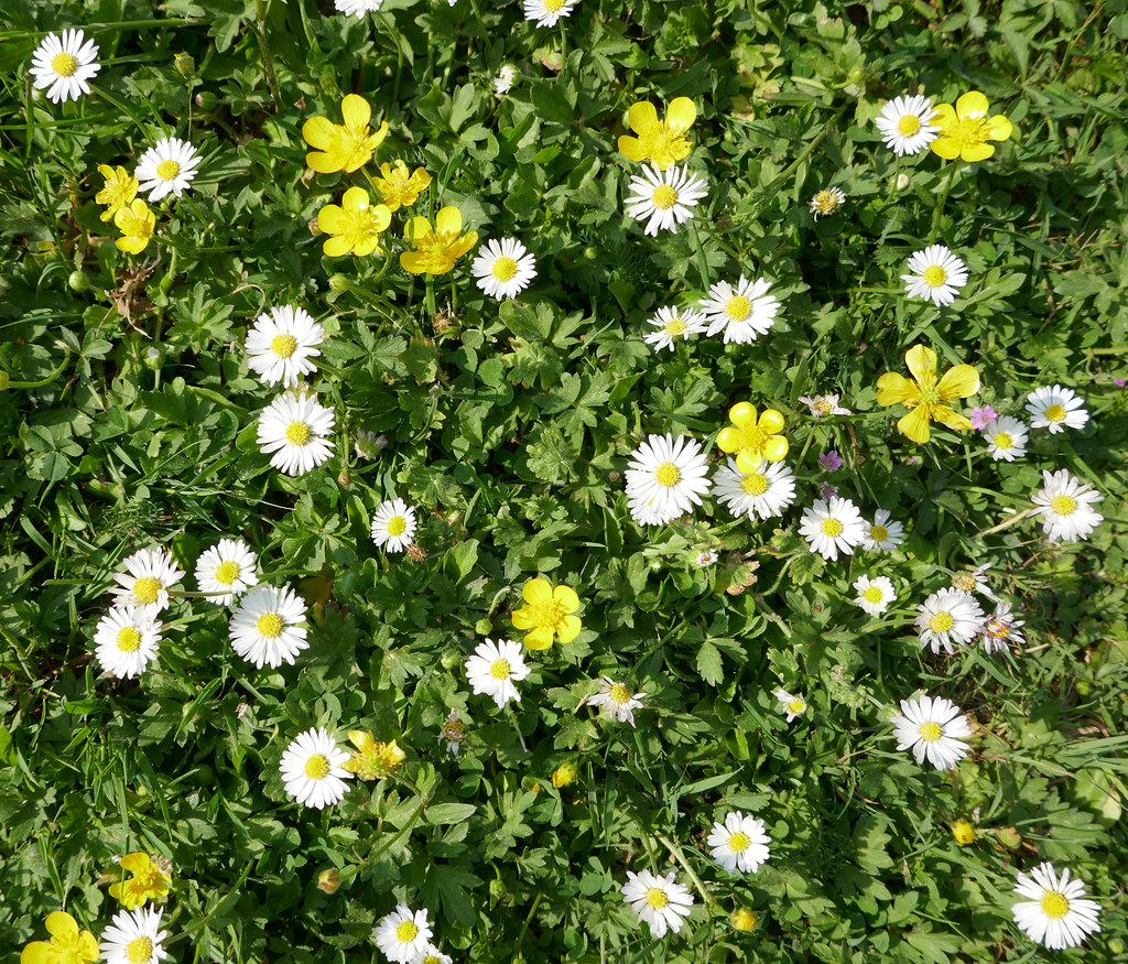 Tiny Yellow And White Flowers In The Grass All Rights Re Flickr