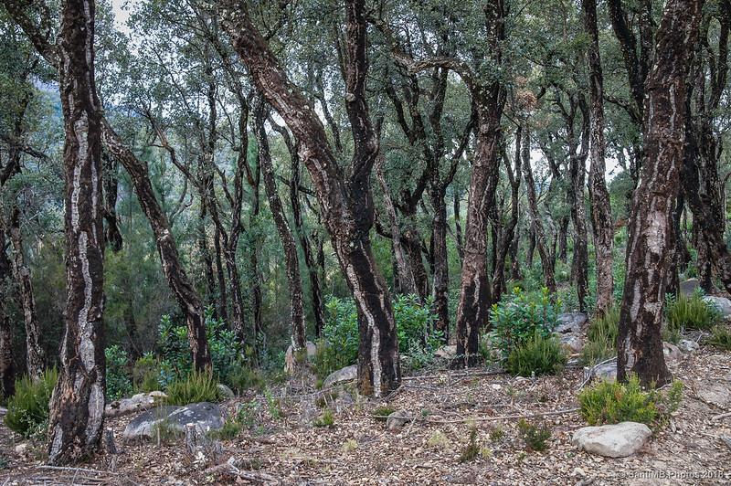 El Bosc de les Agudes