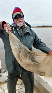 Man holding striped bass in sampling net