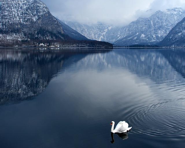 Paisaje invernal con un cisne sobre un lago nevado en calma