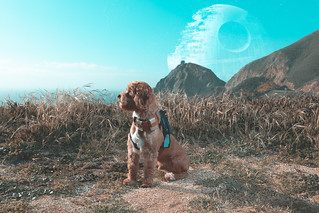 Toby Roosevelt dressed as Chewbacca (#9058) | by mark sebastian