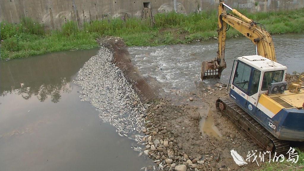 953-1-21SS消防廢水順著水溝流入雨水排放管。進入下游的大坑缺溪與老街溪,連超級耐污的吳郭魚、琵琶鼠魚,都一命嗚呼
