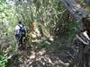 Dans la descente vers le moulin du Vivaghju n°2