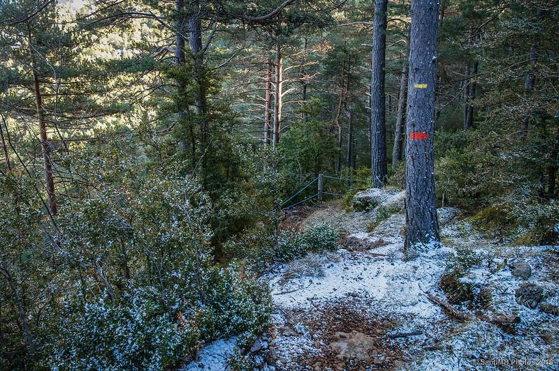 Siguiendo por el sendero del Bosc de Palomera