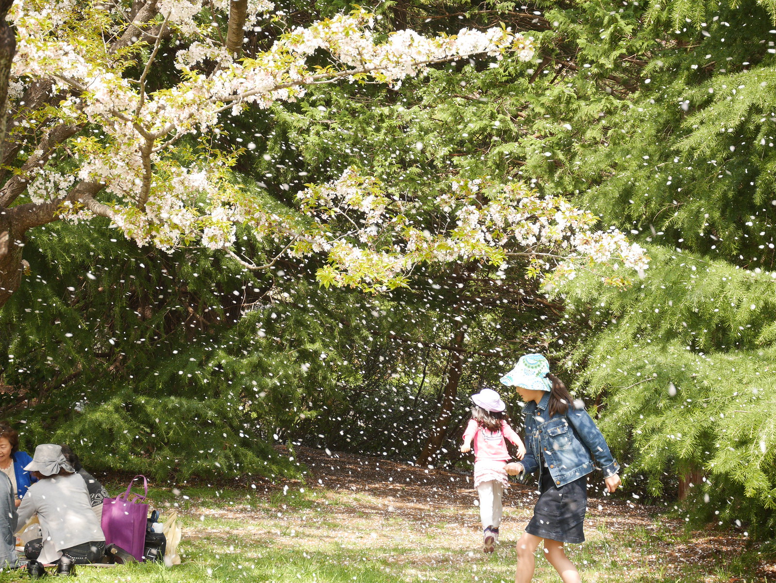 2018東京櫻花行 Day3 – 櫻吹雪、與銘機