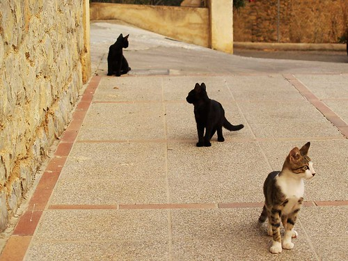 Mallorcan Cats | by johndal
