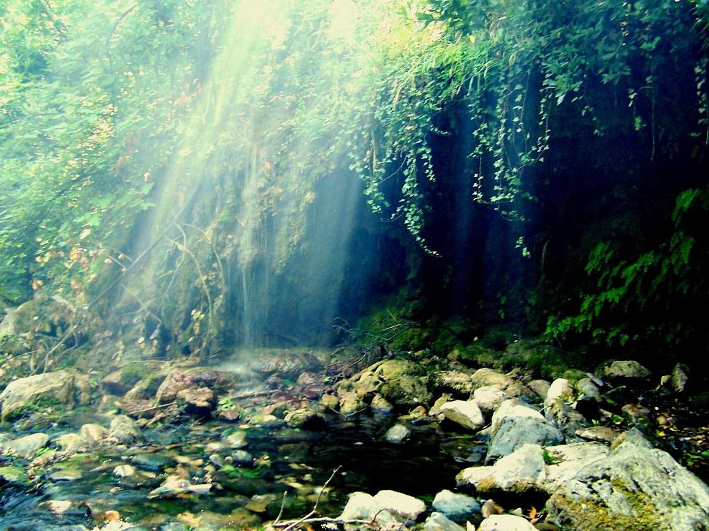 Healing Through Natural Foods Pdf