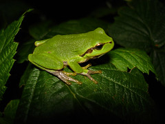 Frog | by g_kovacs