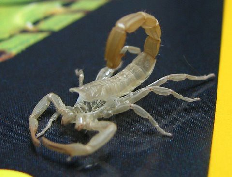 Scorpion Exoskeleton