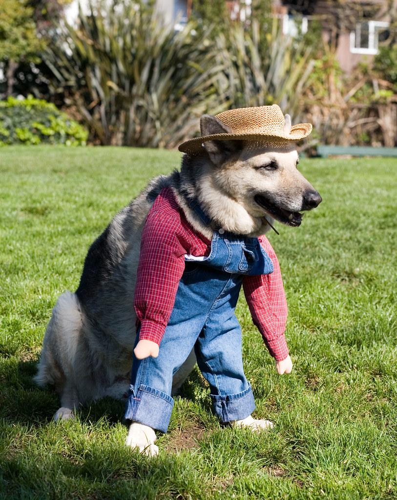Als eerste zien ze die leuke boerderijhond
