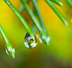 Shiny Droplet | by dee_r