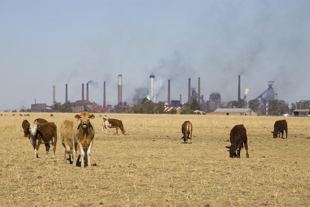 科學家認為地球正經歷第六次大滅絕。攝影:John Hogg;圖片來源:世界銀行 World Bank(CC BY-NC-ND 2.00)