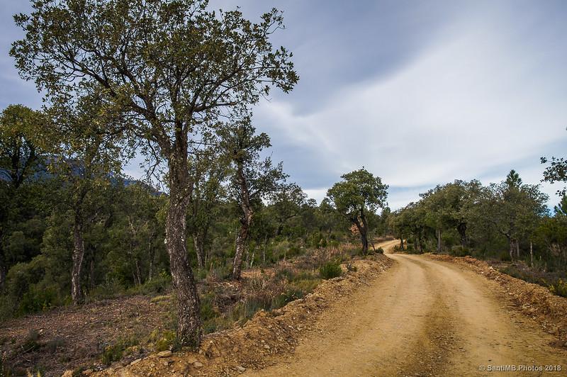 Subiendo al Bosc de les Agudes