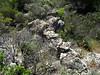 Muret à l'entrée de Pastricciola