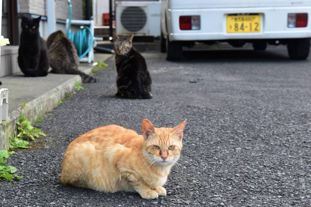 屋久島の野良猫