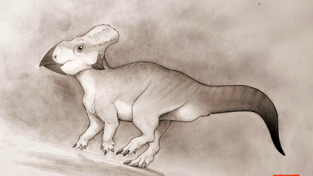 Ceratopsian Dinosaur