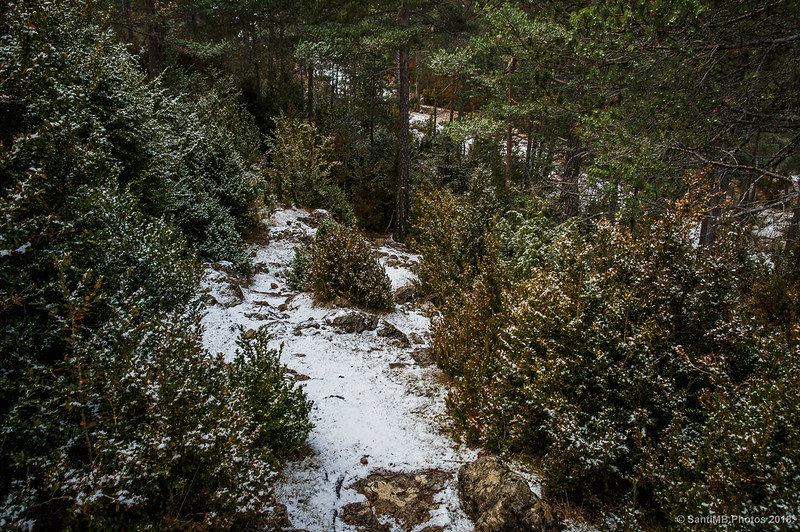 Por el sendero del Bosc de Palomera
